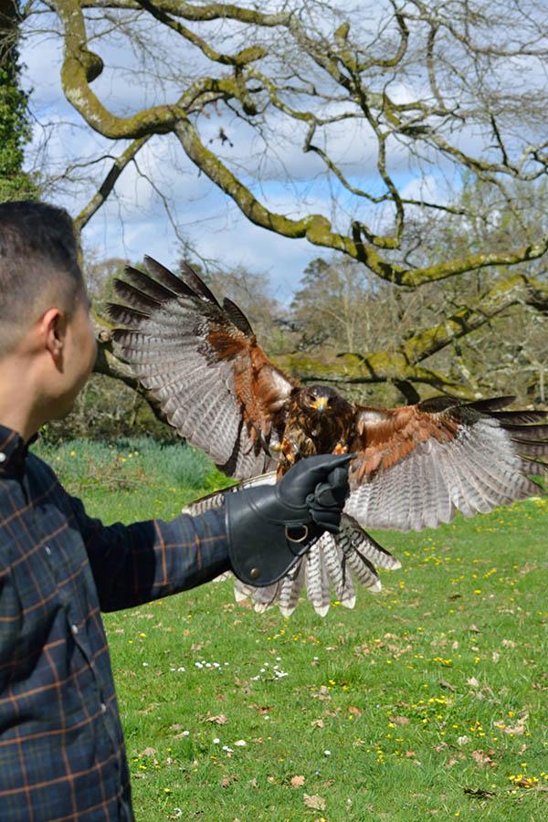 Outdoor Kilkenny Hawkeye Falconry 01