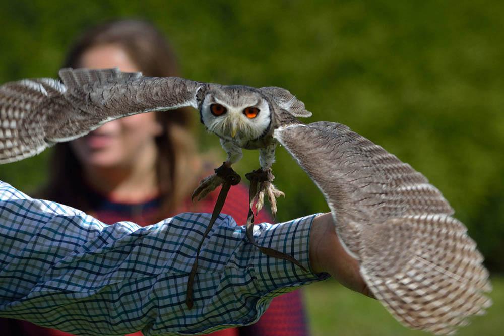 Outdoor Kilkenny Hawkeye Falconry 02