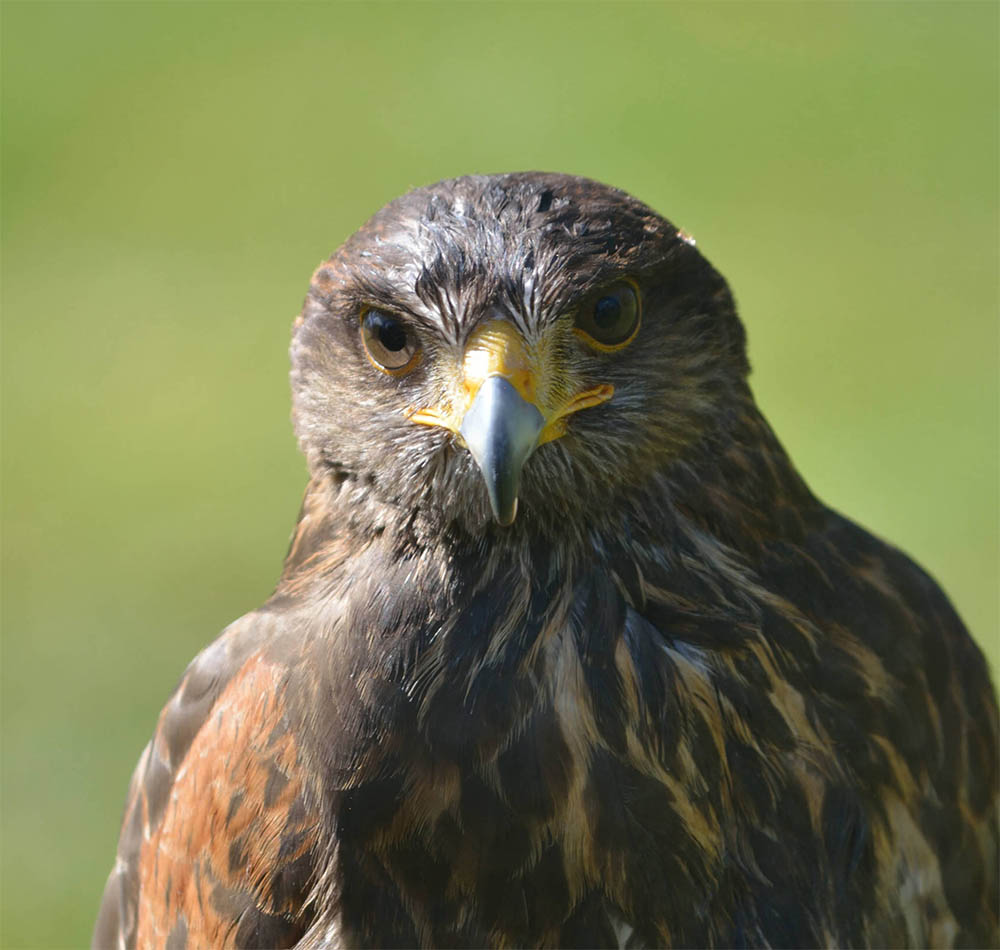 Outdoor Kilkenny Hawkeye Falconry 03