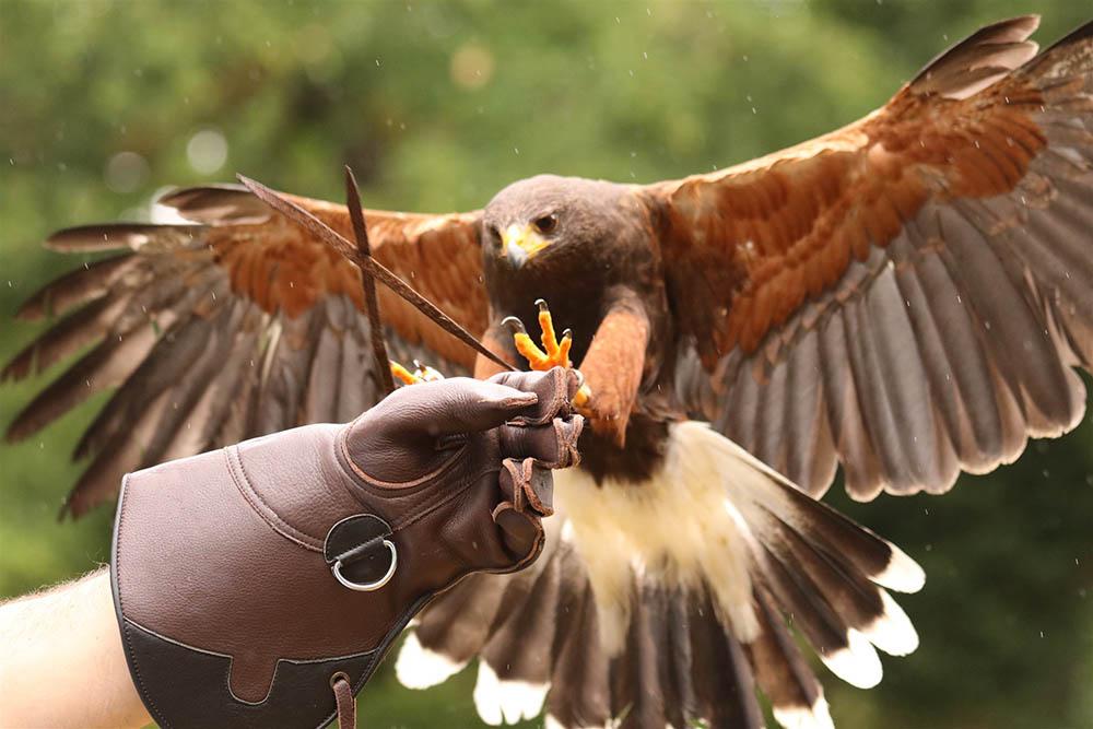 Outdoor Kilkenny Hawkeye Falconry 06