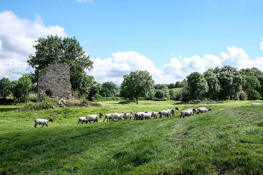 Outdoor Kilkenny Jerpoint Park 03